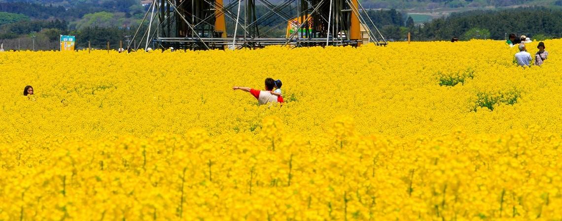 Aomori Festival-10
